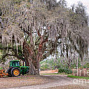 Coosaw Cross Roads With Live Oak Art Print
