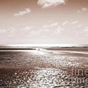 Copper Beach Art Print