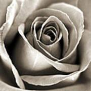 Copper Rose Art Print