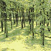 Copse Of Trees Sunlight Art Print