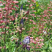 Coral Bells And Irises Art Print