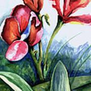 Coral Flower Study Art Print