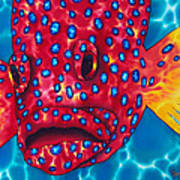 Coral Grouper Art Print