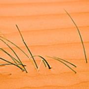 Coral Pink Sands 1 Art Print