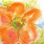 Coral Poppy II Art Print