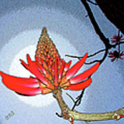 Coral Tree Art Print by Ben and Raisa Gertsberg