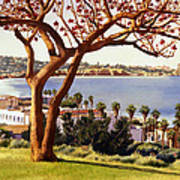 Coral Tree With La Jolla Shores Art Print