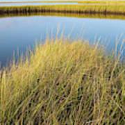 Cordgrass And Marsh, Southern Art Print