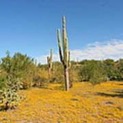 Cordon Cactus And Yellow Wildflowers Art Print