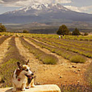 Corgi And Mt Shasta Art Print