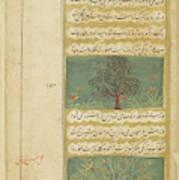 Corinda Tree (carissa Carandas) Art Print