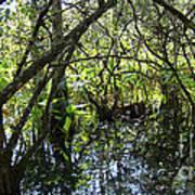 Corkscrew Swamp 3 Art Print