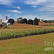 Corn Farmer Art Print