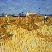 Corn Harvest In Provence Art Print