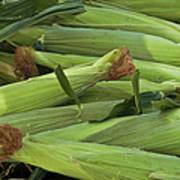 Corn New Jersey Grown  Art Print