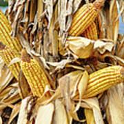 Corn Shock - Sign Of Autumn Art Print