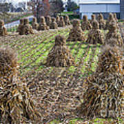 Corn Shocks Amish Field Art Print