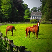 Corralled Horses - Featured In And Lets All Participate And Abc Groups Art Print
