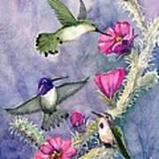 Costa Hummingbird Family Art Print