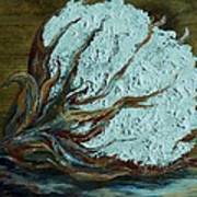 Cotton Boll On Wood Art Print by Eloise Schneider