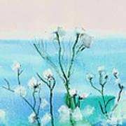 Cotton Poppies Art Print