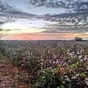 Cotton Sunrise  Print by JC Findley