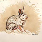 Cottontail  Art Print