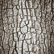 Cottonwood Bark 1 Art Print