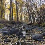 Cottonwood Creek Near Deer Lodge Montana Art Print by Dana Moyer