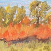 Cottonwood Grove Art Print