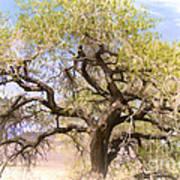 Cottonwood Tree Digital Painting Art Print