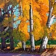Cottonwoods Art Print