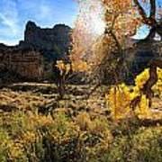Cottonwoods In Buckhorn Wash 4055 Art Print