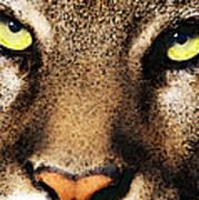 Cougar Eyes Art Print