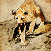 Cougar Hunting Art Print by Ray Downing