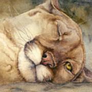 Cougar    I See You     Art Print
