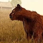 Cougar In A Field Art Print by Daniel Eskridge