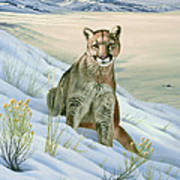 'cougar In Snow' Art Print