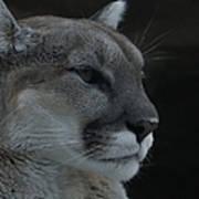Cougar Profile Art Print
