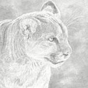 Cougars Gaze Art Print by Laura Klassen