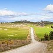 Country Road Otago New Zealand Art Print