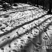 Country Road With Melting Snow In Early Spring Art Print