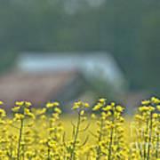 Country Yellow Art Print