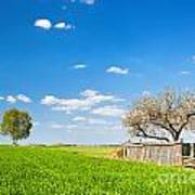 Countryside Landscape During Spring With Solitary Trees And Fence Art Print