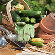 Courgette Basket With Garden Tools Art Print