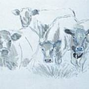Cow Drawing Art Print