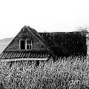 Cow House Black And White Art Print