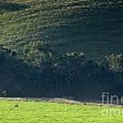 Cow In Field Art Print