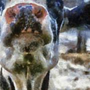 Cow Kiss Me Photo Art Art Print