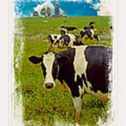 Cow On Farm Version - 3 Art Print